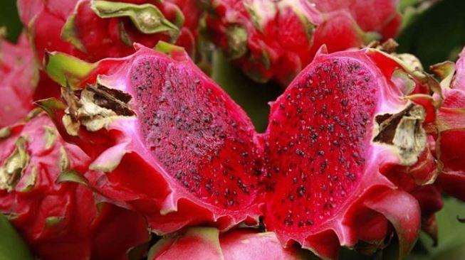 buah naga meningkatkan darah rendah
