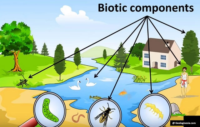 Komponen komponen ekosistem