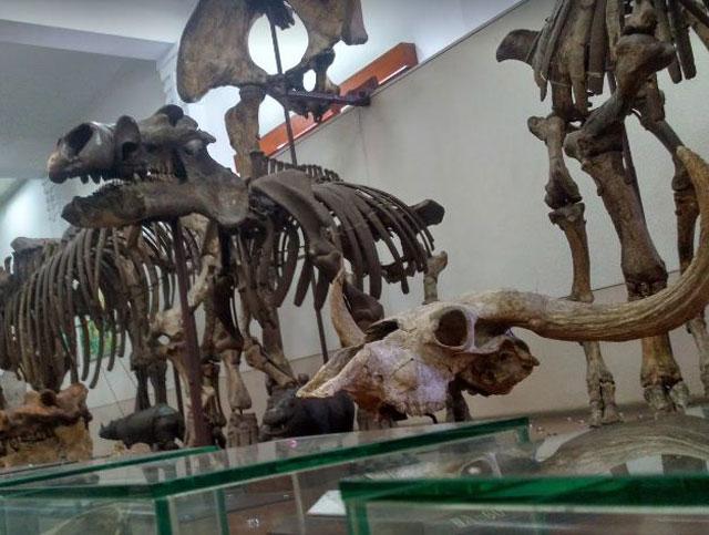 Museum Geologi Bandung, wisata