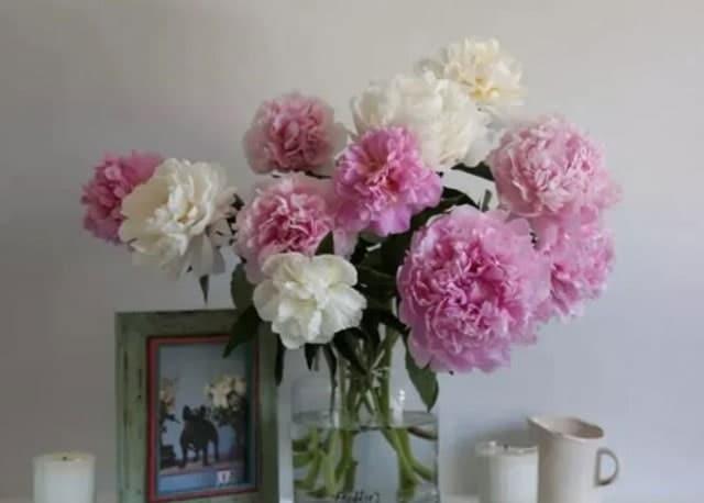 Gambar Bunga Damask