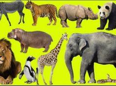 Gambar Hewan di Muka Bumi