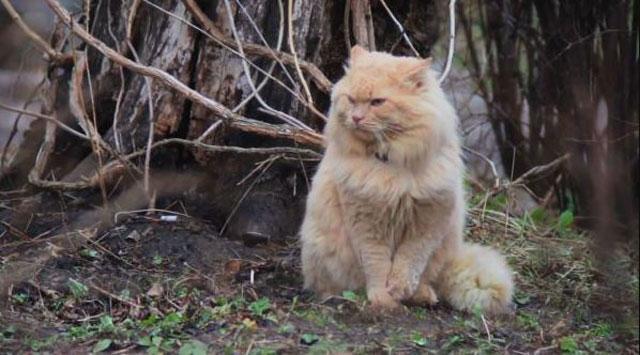 Big giant cat image