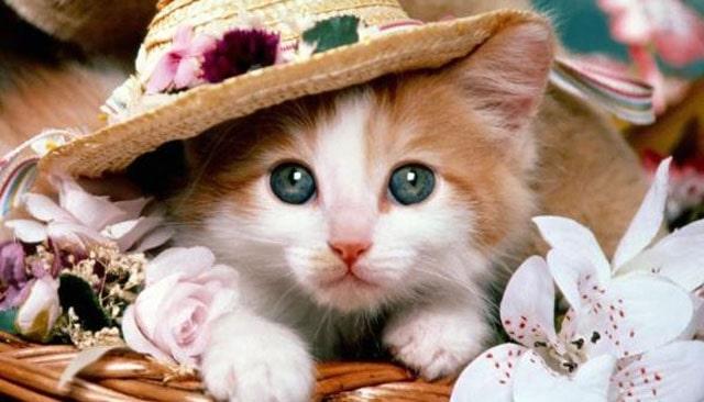 Beautiful cat image