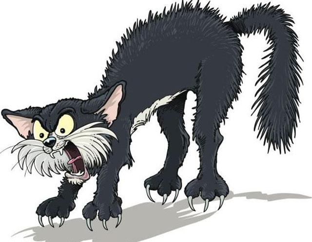 Cute black cat image