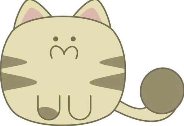 Cardboard cat image