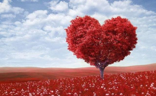 Gambar pohon love