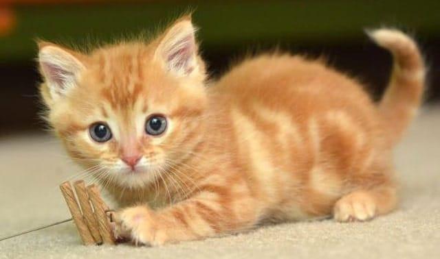 Image of cute kitten