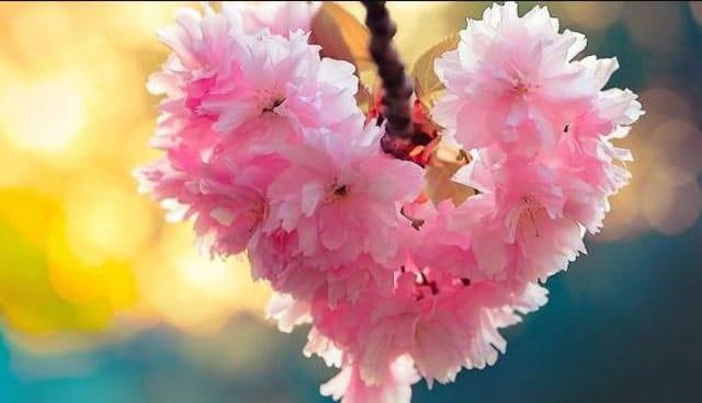 Bunga berbentuk Love, gambar bunga love