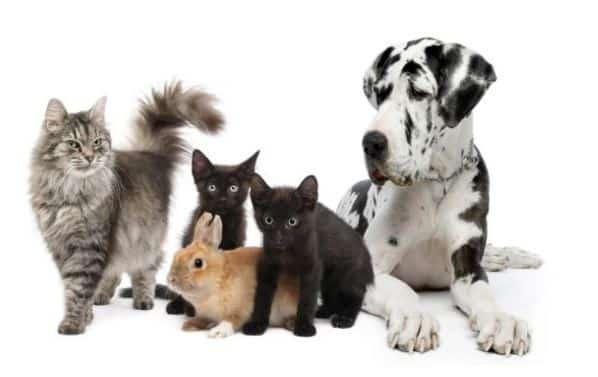 Gambar hewan peliharaan
