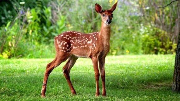 Gambar hewan rusa