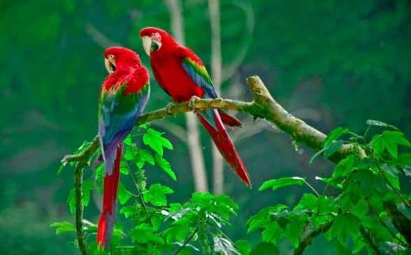 gambar burung kakatua