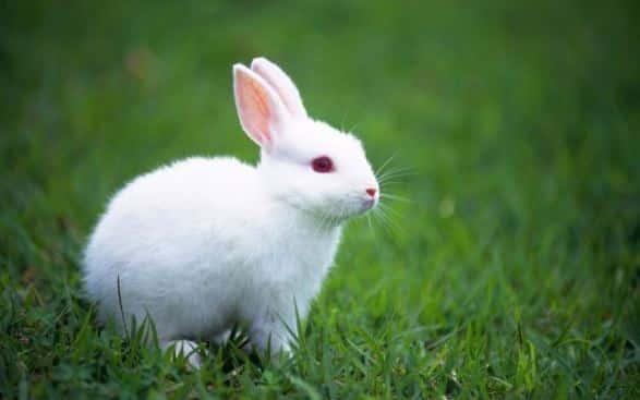 gambar hewan kelinci