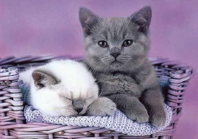 pretty cat pictures