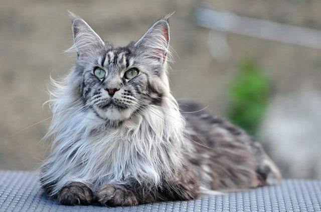 Cute, beautiful cat pictures