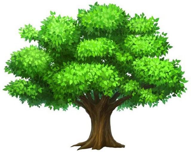 gambar pohon kartun