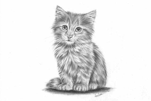 Drawing of cat sketch