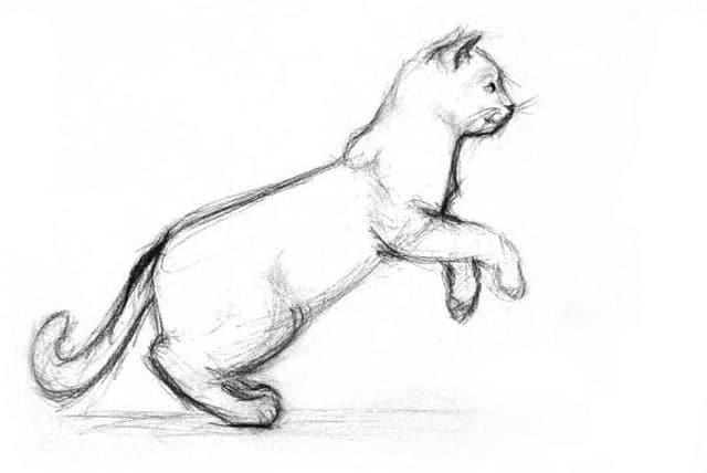 cat sketch image