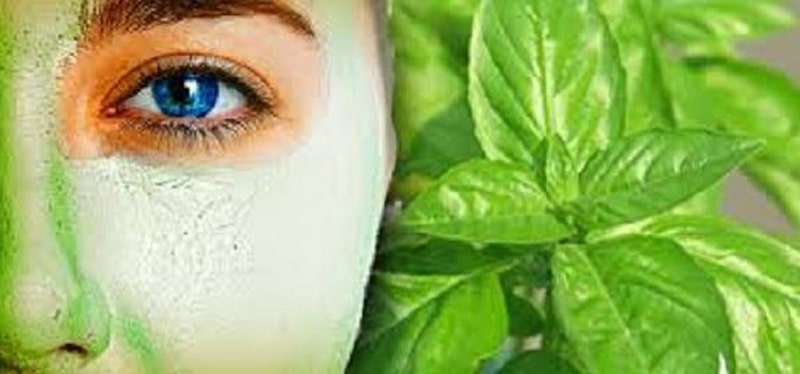 Benefits of Basil Leaves for face