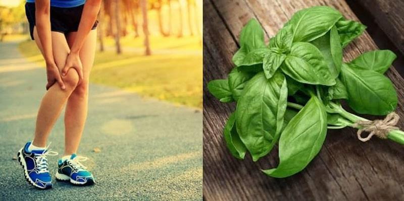 Benefits of Basil Leaves for arthritis treatment
