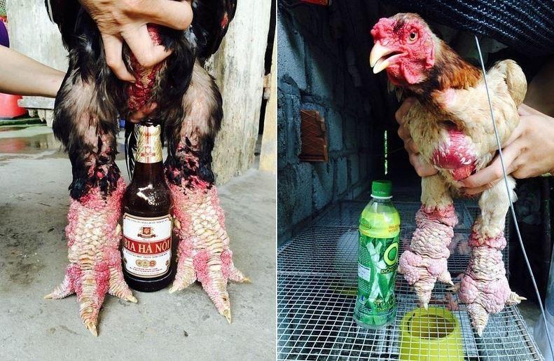Dong Tao Chicken4