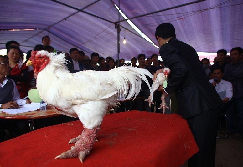Dong Tao Chicken6